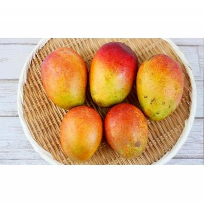 3ふるさと納税「完熟マンゴー約1.5Kg」