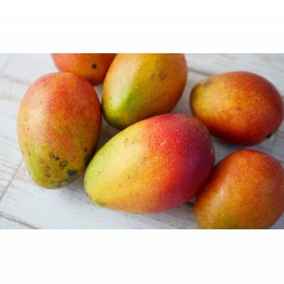 4ふるさと納税「完熟マンゴー約1.5Kg」